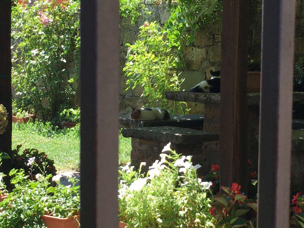 チヴィタでゆっくりくつろぐ猫達